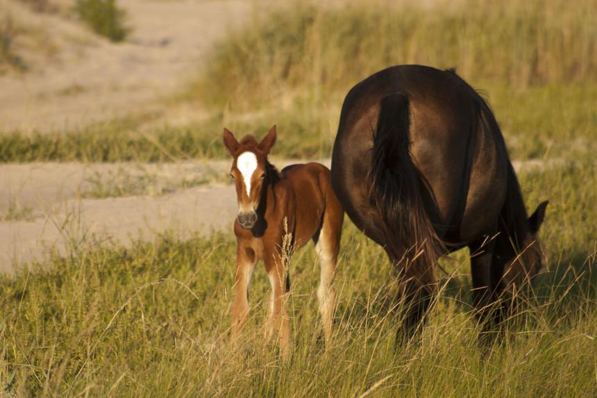 baby and mother horse