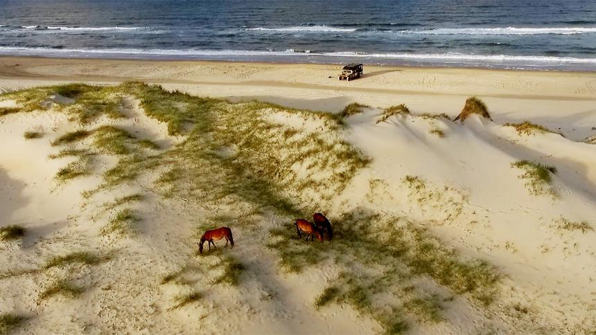 drone view of horses on the beach