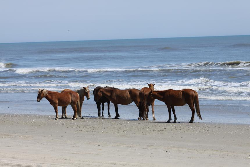 herd on a beach