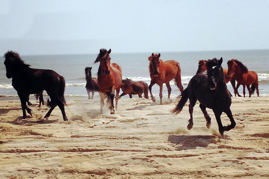 wild horses running on a beach