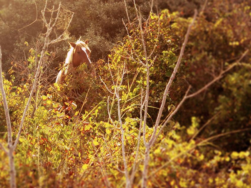 wild young horse in nature